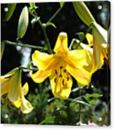 Floral Lilies Art Yellow Lily Flowers Giclee Baslee Troutman Acrylic Print