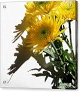 Floral No4 Acrylic Print