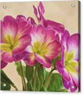 Floral Oil Painting Acrylic Print