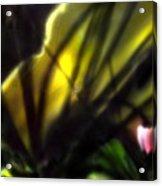 Floral Rays Acrylic Print
