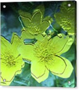 Floral Relief Acrylic Print
