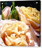 Floral Roses Garden Art Prints Baslee Troutman Acrylic Print