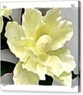 Floral Series I Acrylic Print