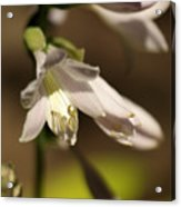 Floral Sideview Acrylic Print