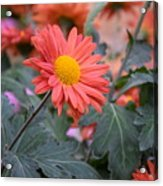 Floral Smiles Acrylic Print
