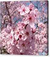 Floral Spring Art Pink Blossoms Canvas Baslee Troutman Acrylic Print