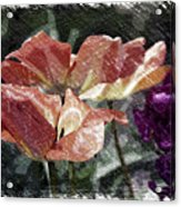 Floral Spring Tulips 2017 Pa 02 Acrylic Print