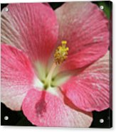 Floral Symphony In Pink Acrylic Print