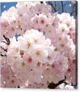 Floral Tree Blossoms Flowers Pink Art Baslee Troutman Acrylic Print