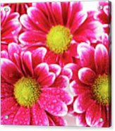 Floral Wallpaper Acrylic Print