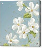 Floral Whorl Acrylic Print
