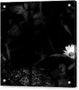 Floral Yellow Peek A Boo Bw Acrylic Print