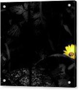Floral Yellow Peek A Boo Sc Acrylic Print