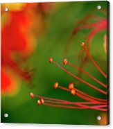 Florals Acrylic Print