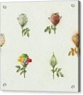 Florentius The Gardener05 Acrylic Print