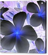 Florescent Flowers Acrylic Print