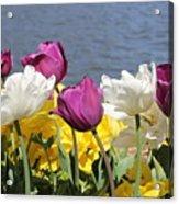 Floriade 9 Acrylic Print
