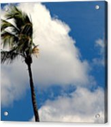 Florida Clouds Acrylic Print