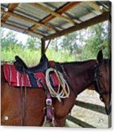 Florida Cracker Horse Acrylic Print
