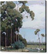 Florida Cypress With Birds Acrylic Print