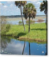 Florida Essence - The Myakka River Acrylic Print