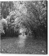 Florida Garden Scene_011 Acrylic Print