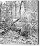 Florida Garden Scene_012 Acrylic Print