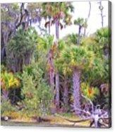 Florida Greens Acrylic Print