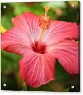 Florida Hibiscus Acrylic Print