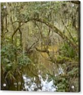 Florida Jungle Acrylic Print