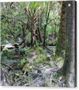 Florida Landscape - Lithia Springs Acrylic Print
