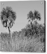 Florida Landscape Acrylic Print