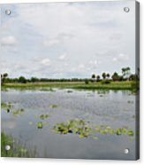 Florida Landscape Acrylic Print by Steven Scott