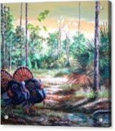 Florida Osceola Turkeys- The Two Kings Acrylic Print