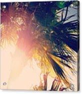 Florida Palm Acrylic Print