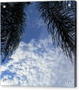Florida Palm Fronds Blowing In The Breeze Acrylic Print