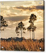 Florida Pine Landscape By H H Photography Of Florida Acrylic Print