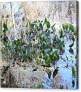 Florida Pond Acrylic Print