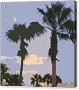 Florida Queen Palm Trees   Acrylic Print