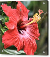 Florida Red Acrylic Print