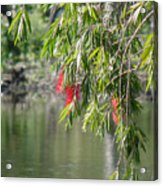 Florida Reflections Acrylic Print