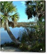 Florida Shade Trees Acrylic Print