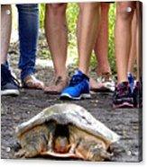 Florida Softshell Turtle 003 Acrylic Print