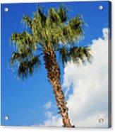 Florida State Tree Acrylic Print