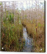 Florida Trail Big Cypress Acrylic Print