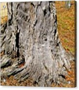 Florida Tree Stump Acrylic Print