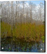 Florida Wilderness Acrylic Print