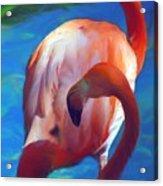 Florida's Flamingo's Acrylic Print