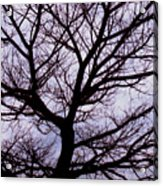 Floss Silk Tree Acrylic Print