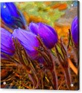 Flourescent Flowers Acrylic Print